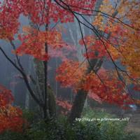 朝霧と紅葉の城跡公園