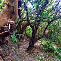 癒しのホロホローの森 八重瀬町