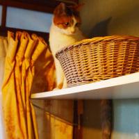 三毛猫リリのおもいで。 麻屋与志夫