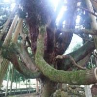 プチパワースポット巡り~樹に満たされる~