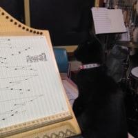 音楽教室ですが猫の話です