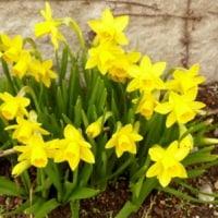 春を告げる野菜や花
