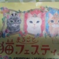 まるごと猫フェスティバル2017