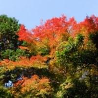 京都の紅葉、今でしょう!(よしだ麺)