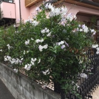 この季節にこの花?