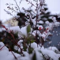 珍しく 雪景色です