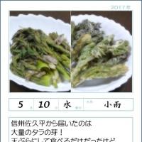 170510 タラの芽