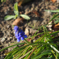 寒中散歩で見かけた花