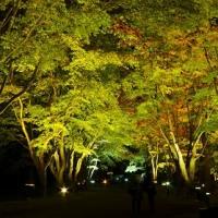 """秋の夜に浮かぶ、""""紅葉""""..."""