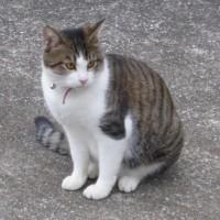 可愛いネコ達(トム君やことりちゃん他)