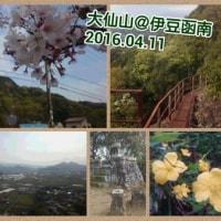 【モブログ】謎に包まれた伊豆の頂・大仙山