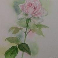 スイートアバランスという薔薇