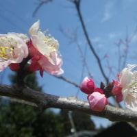 春の雑草の花