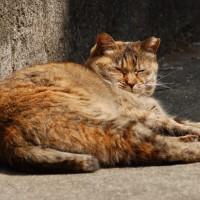 2400枚目の猫写真