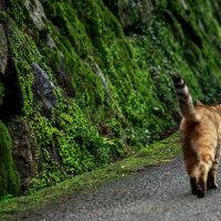 箕面市の猫さん