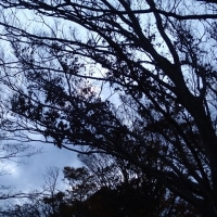 2016-12-07 鹿野山の霧 (幻の桜 地球を救うブログさんより)