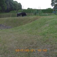 「草刈り」やら「シート張り替え」やら。畑仕事はつづきます。