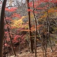 紅葉と雪と青空と・・・
