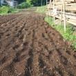 小豆の播種と長ネギの植え込み