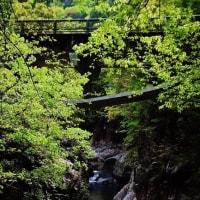 今治市の鈍川渓谷でも新緑が始まっています (その2)
