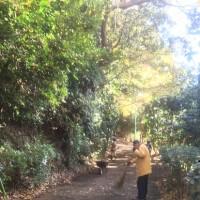 12月3日 活動報告1 イチョウ並木の掃除
