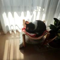ネコの日ですが・・・
