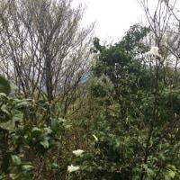 千石城山~29.4.26~