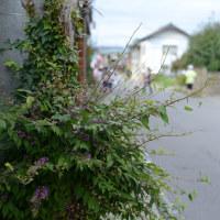路傍の植物-2 小布施町
