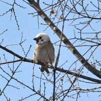 三島江周辺の鳥!