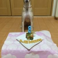 ☆祝☆レモンちゃん8歳☆