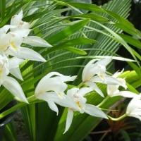 咲くやこの花館 (3)