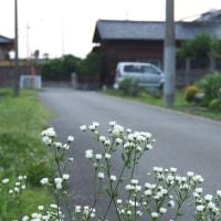 わが家への道