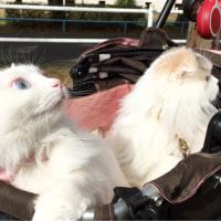 猫の日の猫たち