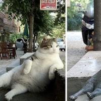 猫親分、逝去