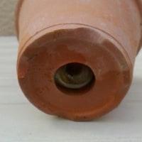 スミレの育て方2月 害虫対策  簡易ビニール温室内の鉢にナメクジ