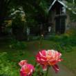 素敵なお庭のカフェ《コンブリオ》でランチ♪