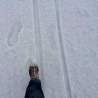 雪のため歩いて出勤