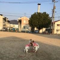 3/20  今日のパピ子といちご