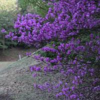 4月20日(木)コース風景