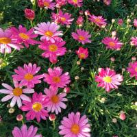 横浜市中区・山下公園の草花を眺める