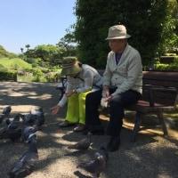 景 色/水前寺成趣園