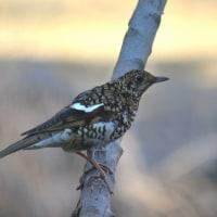 ちょっと珍しい鳥たち