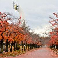 太陽の塔の秋
