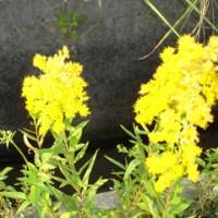 道端に咲く野花