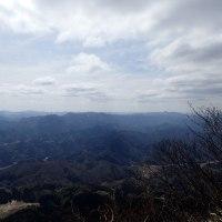 青葉山にミスミソウを見に行く