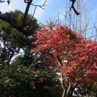 NHKこころ旅ー福岡県ー1