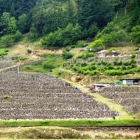 愛媛県・鬼北町の「大宿の棚田」