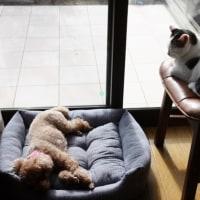 元気良すぎる保護したばかりの子猫(動画)