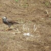 空地(草刈0日)小鳥2羽だけ