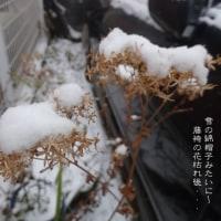 雪が降り止んで・・・・・冷たい~